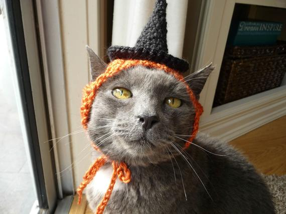 cat in knitted witch's hat