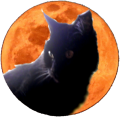Cat before Full Moon