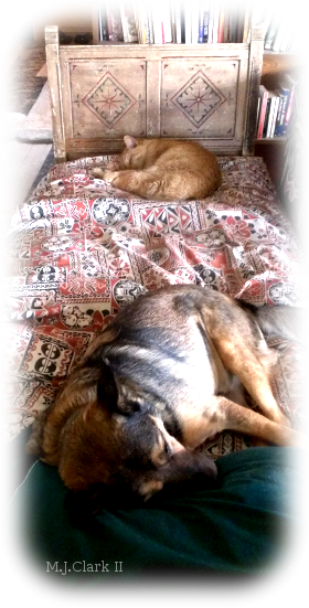 Sleepy Dog and Cat