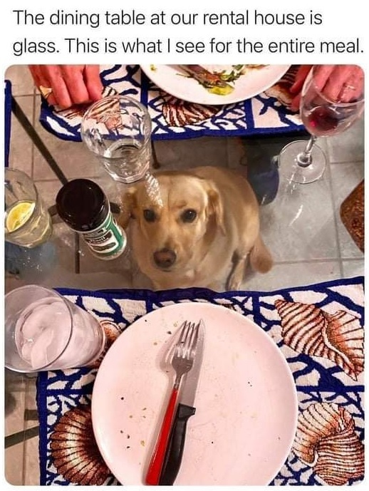Dinner with dog
