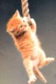 Kitten hanging on to rope